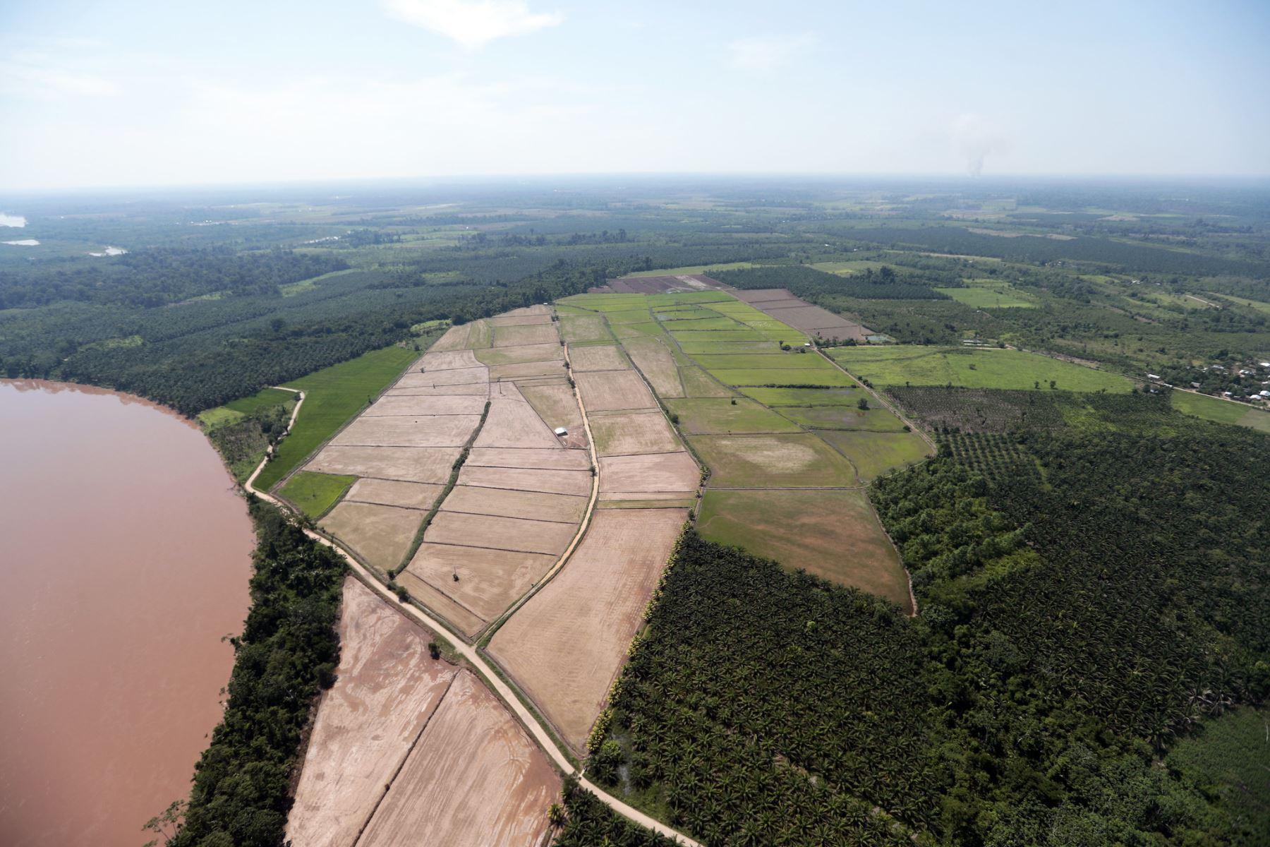 El presidente de la República, Pedro Castillo, inspeccionó el tramo de la carretera Curimaná - Neshuya así como campos de cultivos de la provincia Padre Abad, en su visita a la región Ucayali. Foto: ANDINAPrensa Presidencia