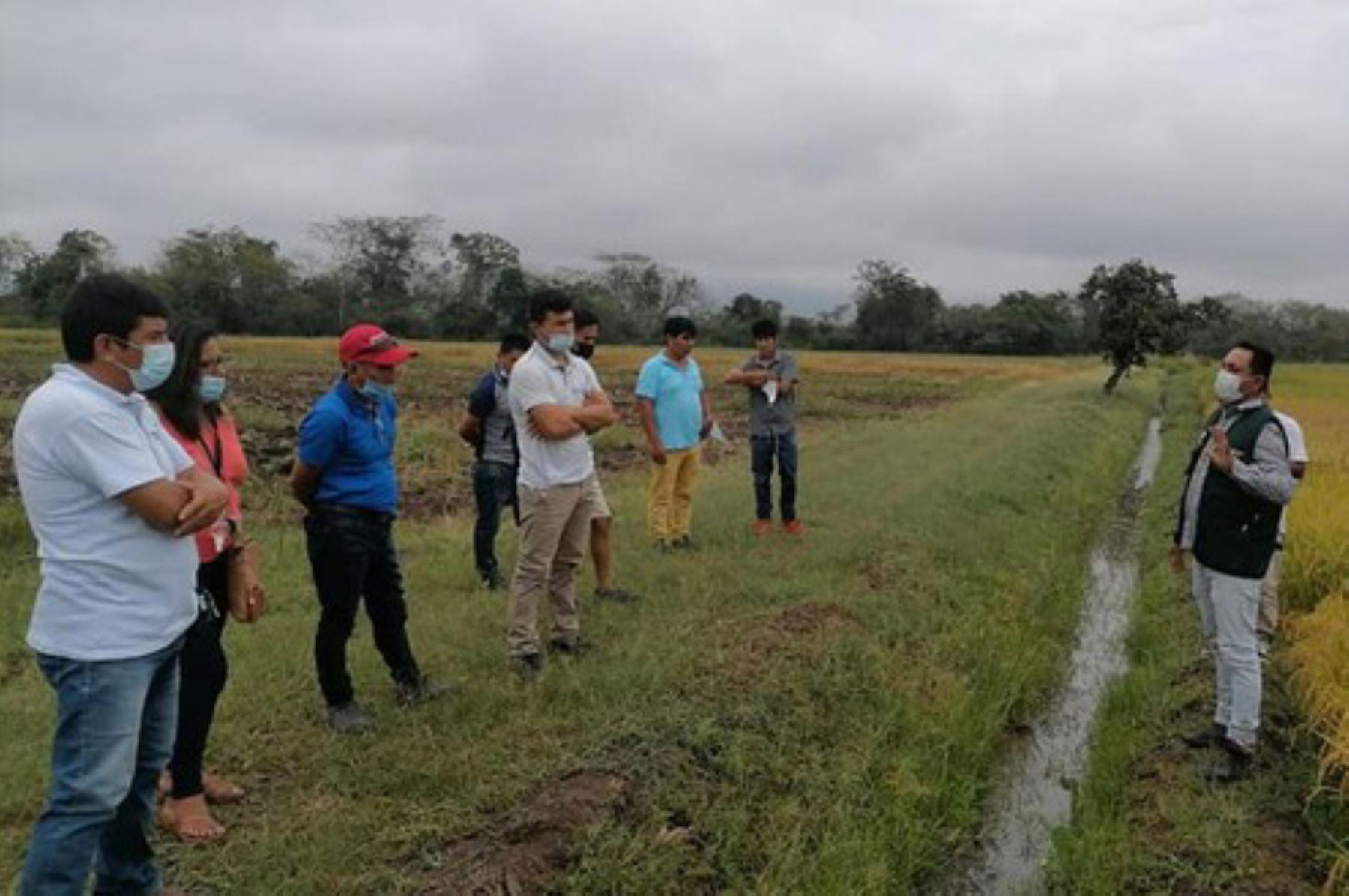 Agricultores líderes de Huánuco mejorarán producción de arroz