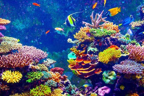 Los arrecifes son la principal barrera que protege la costa de Belice de huracanes, tormentas y la erosión. Foto: internet.