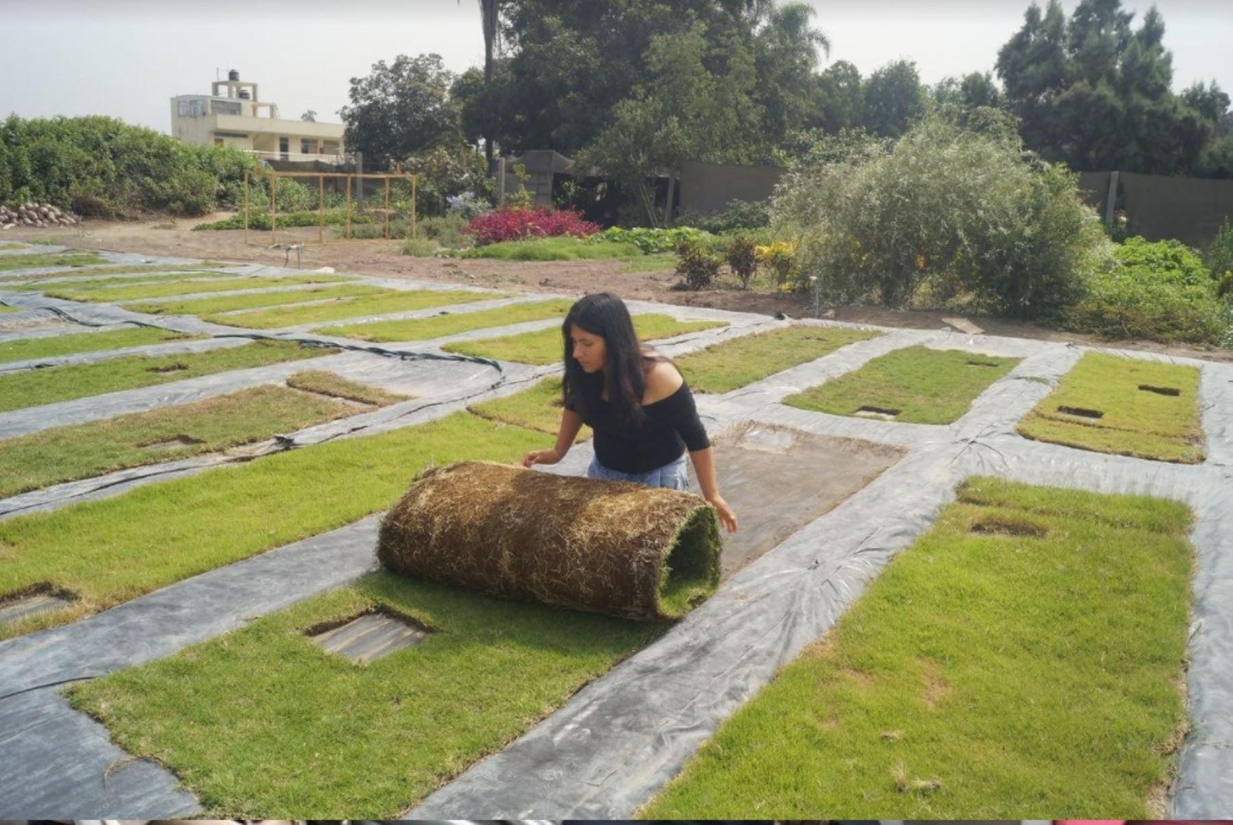 Organizan primer congreso del césped para promover y mejorar su cultivo en el Perú