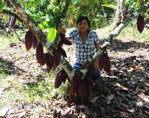 Sonia Rodríguez Anyosa lidera el gran emprendimiento en el que participan 130 productoras de cacao del distrito de Pichari, en Cusco, y que las ha convertido en empresarias exitosas. ANDINA/Difusión