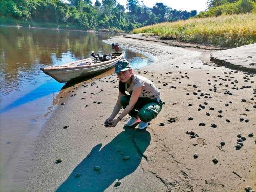 El Minam y Profonanpe reactivaron la campaña Adopta una taricaya: conserva Pacaya que tiene como objetivo asegurar la conservación de las tortugas que habitan en la Reserva Pacaya Samiria y ayudar a las comunidades que se dedican a esta tarea. ANDINA/Difusión