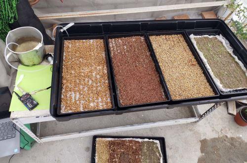 eGreens funcionará como parte del sistema de monitoreo para advertir al usuario que sus vegetales están listos para ser cosechados.