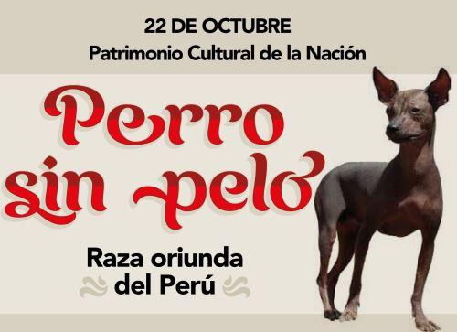 Perú celebra hoy los 20 años de la declaratoria que reconoce al entrañable perro sin pelo peruano como Patrimonio Cultural de la Nación.