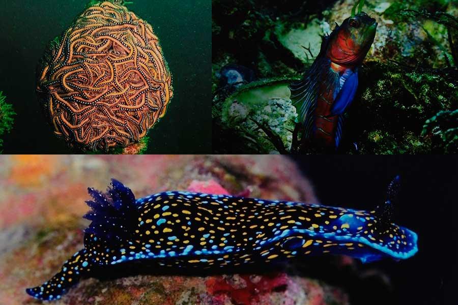 Biólogo fotografía y descubre en Perú especies marinas nunca antes vistas