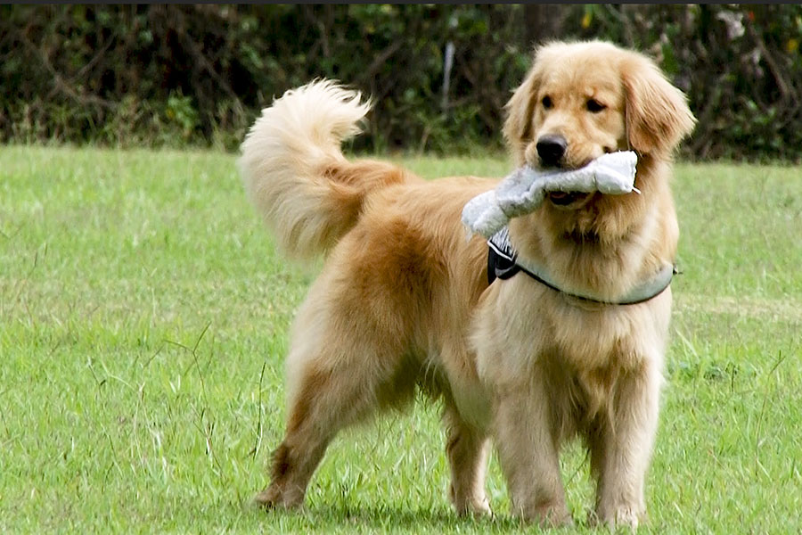 Policía Canina al servicio del ciudadano con el binomio guía-can