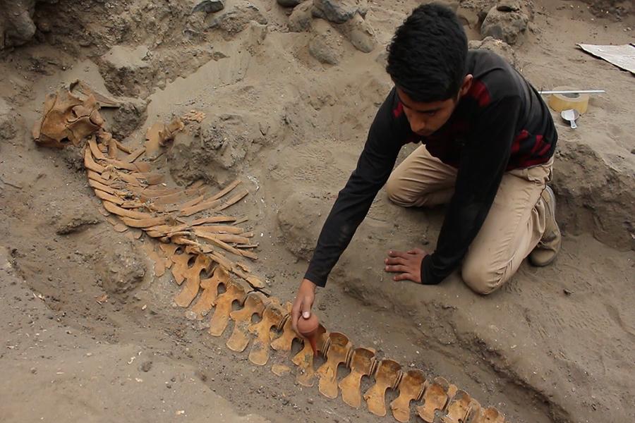 Sorprende hallazgo de entierro Moche con enormes especies marinas