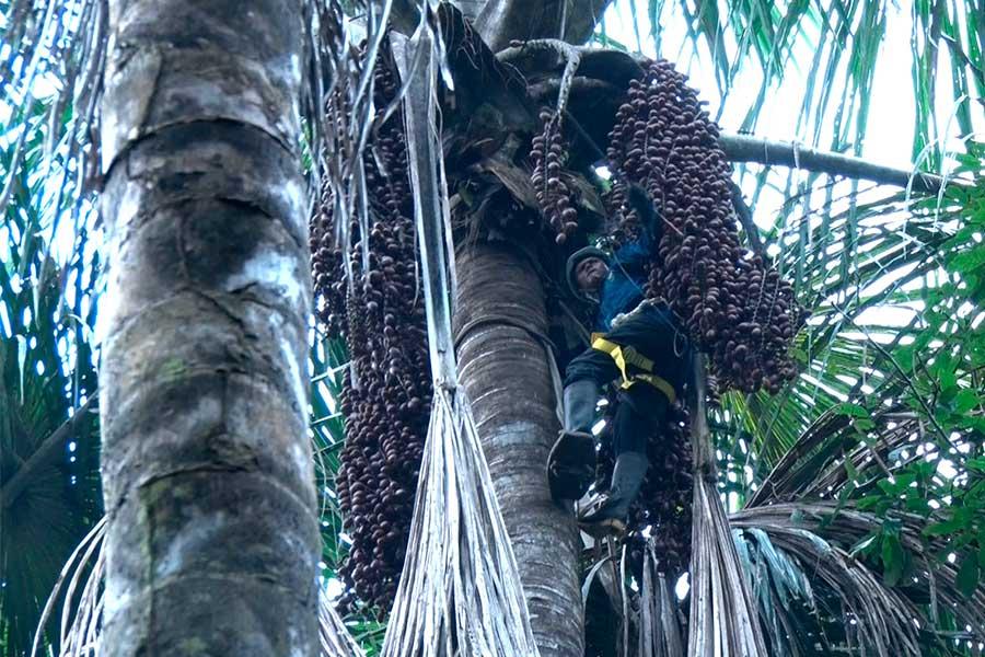 Pacaya Samiria: nativos dan el ejemplo y evitan la deforestación