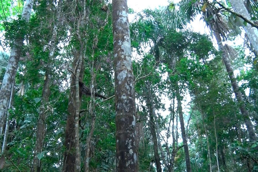 Amazonía: así preservamos nuestros humedales
