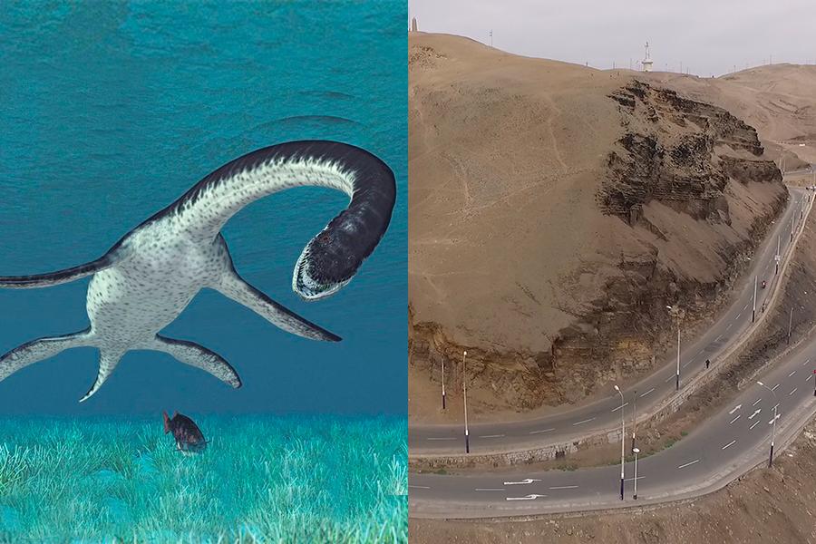 Morro Solar y el asombroso hallazgo de especie marina jurásica