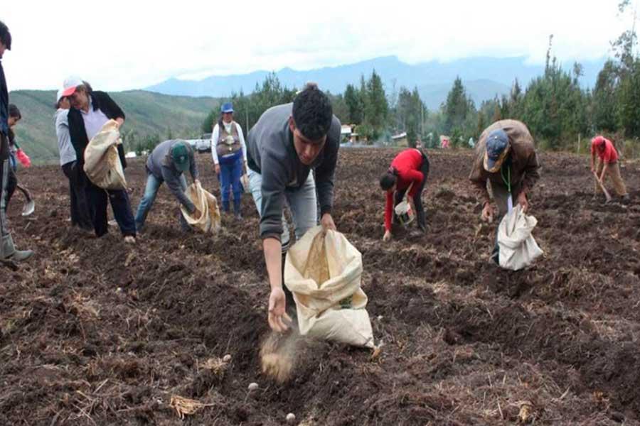 FAO: Agricultura familiar debe estar orientada al mercado