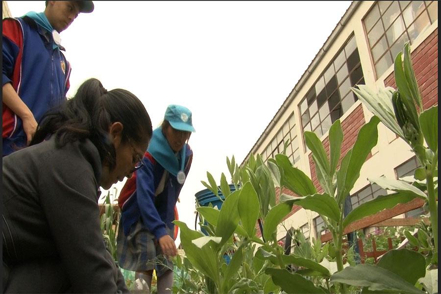 Escolares reúsan agua para cosechar en zona desértica