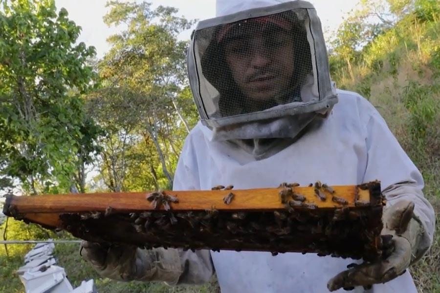Nicaragua: apicultores crían abejas reinas para paliar efectos de la sequía
