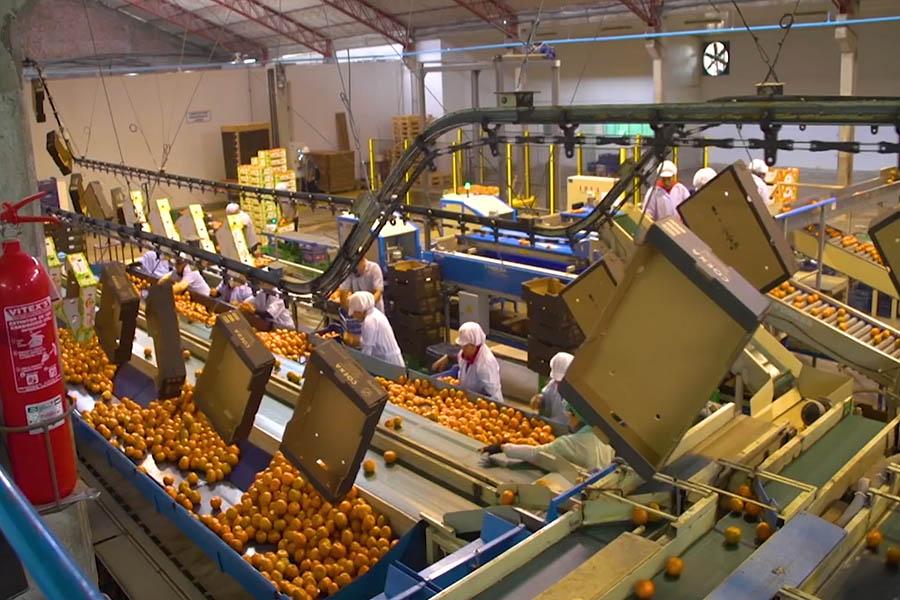 La meta al Bicentenario es llegar a los 10,000 millones de dólares en agroexportación