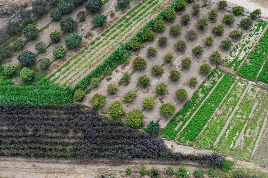 Parque de las Leyendas cosecha alimentos para sus animales