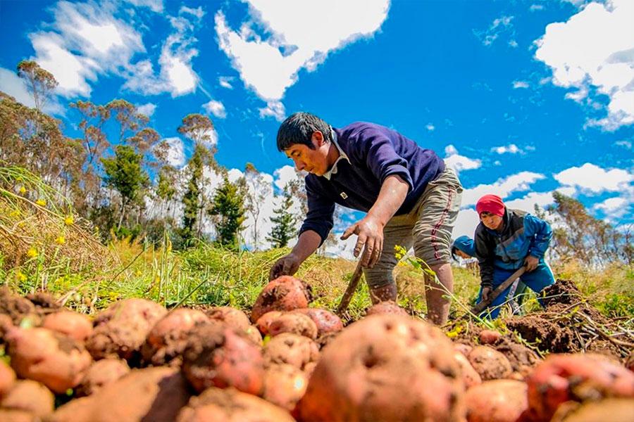 Gobierno potenciará FAE-Agro con S/ 3,000 millones para reactivar sector rural