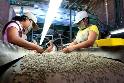 Más de 200 productores de café orgánico de Huánuco se benefician con la exportación de su producto a Canadá y Estados Unidos.