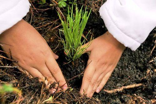 Durante la Semana Forestal Nacional se realizará una campaña de reforestación.