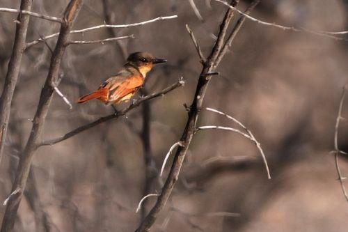 El Perú cuenta con una gran diversidad de especies de aves, varias de ellas endémicas.