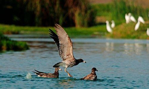 Los Pantanos de Villa es la única área natural protegida ubicada dentro de una ciudad.