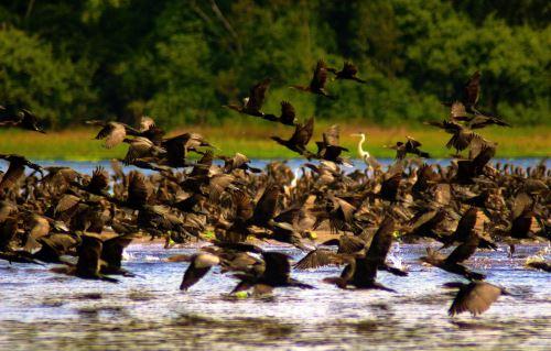 Reserva Natural (Foto: Agencia Andina)
