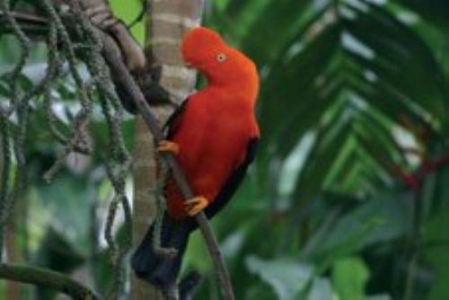 Existe un mercado objetivo de más de 6 millones de personas interesadas en la observación de aves.