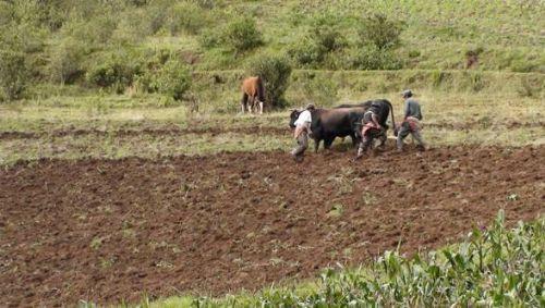 Las comunidades campesinas de Arequipa deben adecuar sus cultivos para afrontar el cambio climático.
