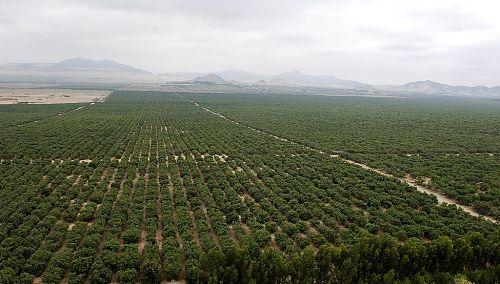 Chavimochic dedica 3,000 hectáreas para el cultivo de arándano de exportación.